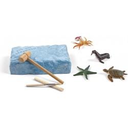 Kit de excavación de fósiles y animales marinos