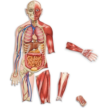 Cuerpo humano magnético gigante